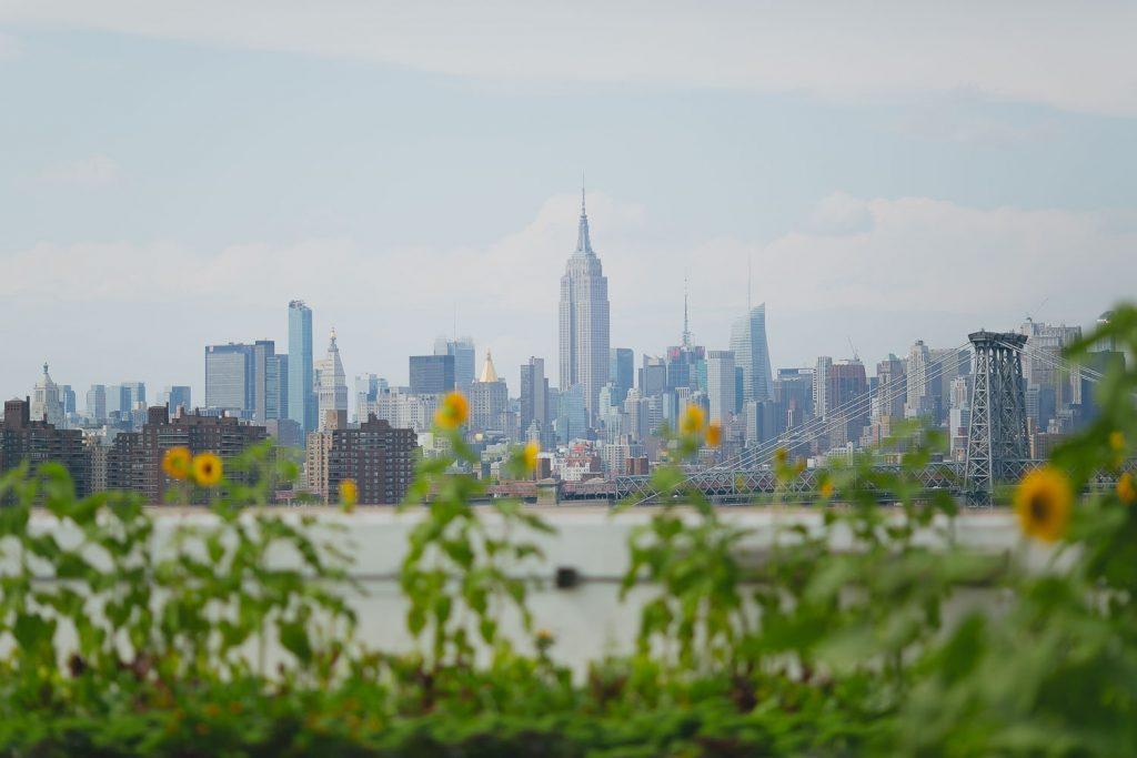 campo de girassol em nova york