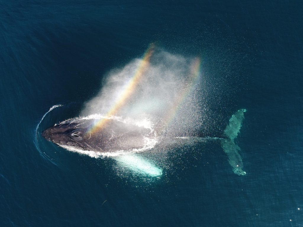 Passeios para ver baleias na California los angeles